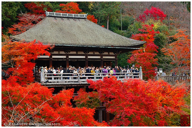Kiyomizu-dera Temple with Autumn leaves : copyright Damien Douxchamps
