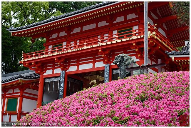 Yasaka-jinja Shrine main gate image copyright Damien Douxchamps