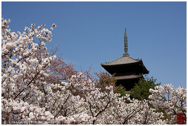 Pagoda at Ninna-ji Temple in spring : copyright Damien Douxchamps
