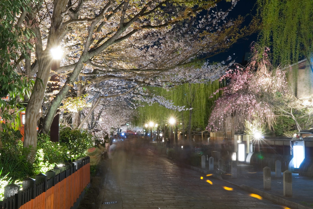 Cherry blossoms in Gion Shimbashi  : copyright Jeffrey Friedl