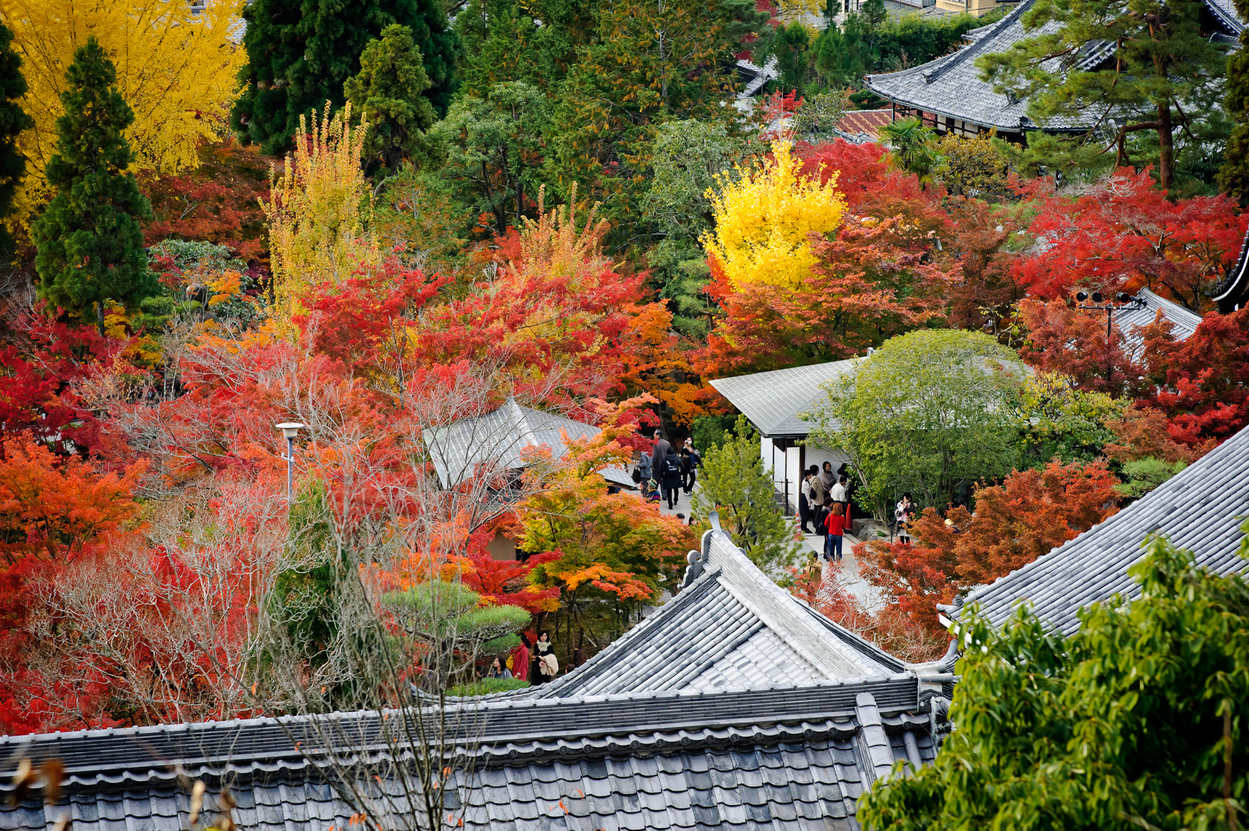 Eikan-do Temple with fall colors  : copyright Jeffrey Friedl