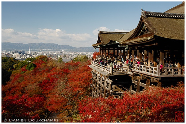 Kiyomizu-dera Temple with blazing maple leaves : copyright Damien Douxchamps