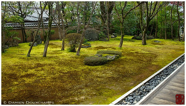 Moss garden at Myoshin-ji's Kobai-in Subtemple: copyright Damien Douxchamps