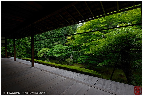 New green at Keishun-in Subtemple at Myoshin-ji: copyright Damien Douxchamps