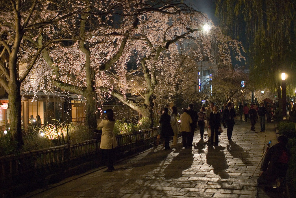Cherry blossoms at night in Gion Shimbashi area: copyright Jeffrey Friedl