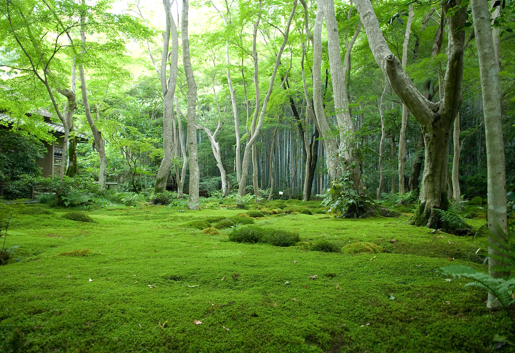 Moss garden at Gio-ji Temple in Arashiyama: copyright Jeffrey Friedl