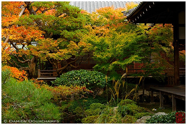 Garden at Eikan-do Temple: copyright Damien Douxchamps