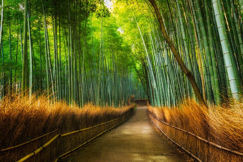 Arashiyama Bamboo Grove. Editorial credit: Joshua Davenport / Shutterstock.com