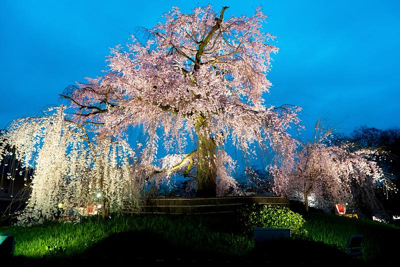 Sannen-zaka during evening in cherry blossom season. Editorial credit: Travelerpix / Shutterstock.com