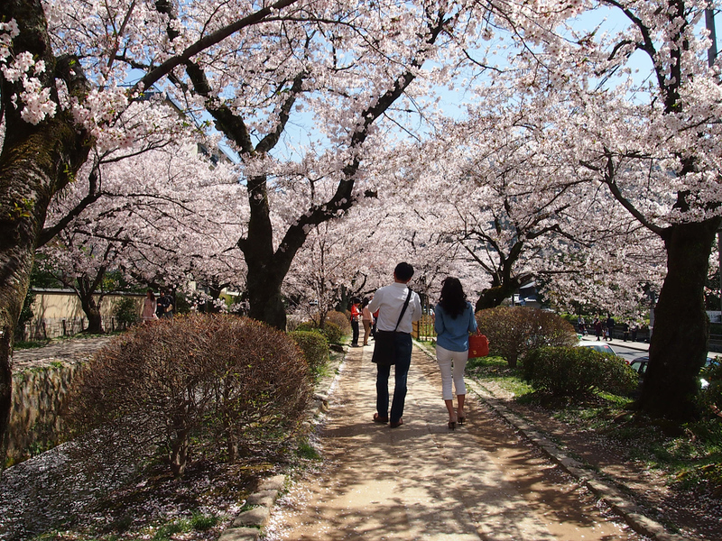 Couple strolling under the cherries in Kyoto. Editorial credit: Usa.Pin / Shutterstock.com