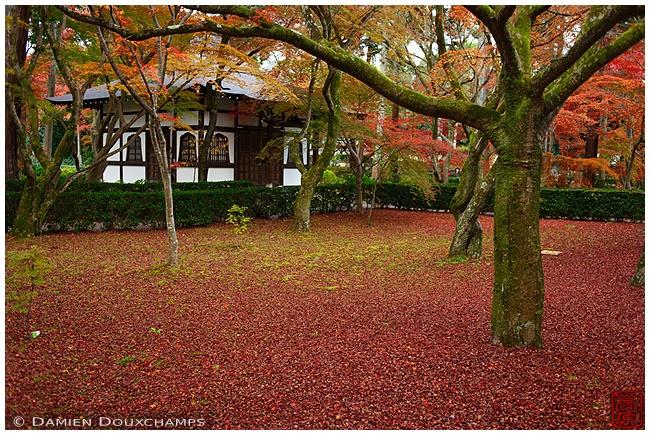 Fallen leaves at Shinyo-do Temple : copyright Damien Douxchamps