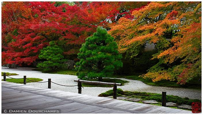 Tenju-an garden with fall foliage : copyright Damien Douxchamps