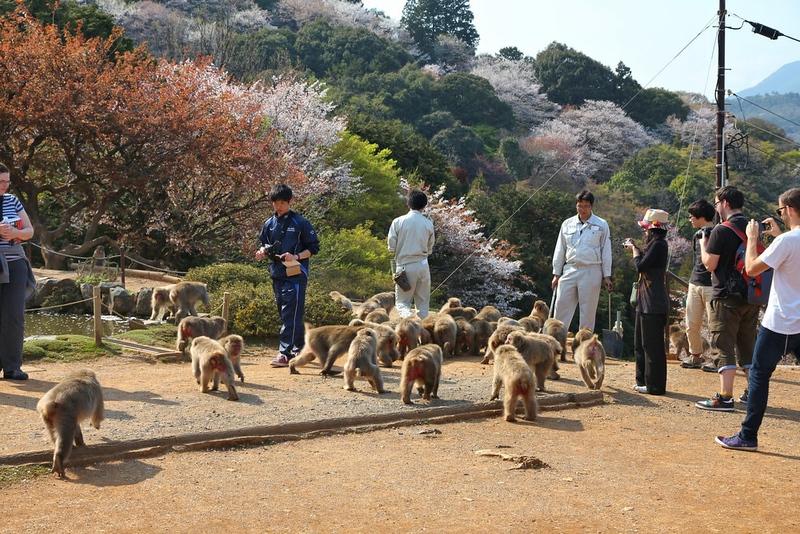 Arashiyama Monkey Park. Editorial credit: Tupungato / Shutterstock.com