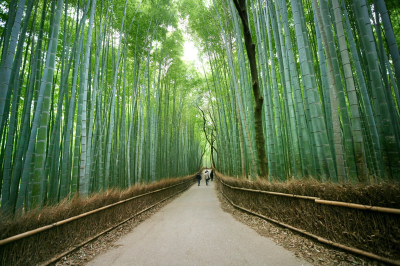 Image result for Arashiyama bamboo groves