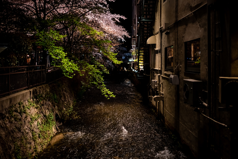 Gion Shirakawa Canal in evening in cherry blossom season. Editorial credit: Kristi Blokhin / Shutterstock.com