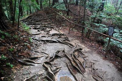 Kinone Michi, a cedar-root-covered path from Kibune to Kurama Temple