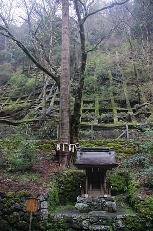 Renri no sugi – A cedar and a maple merged together. A symbol of a close couple.