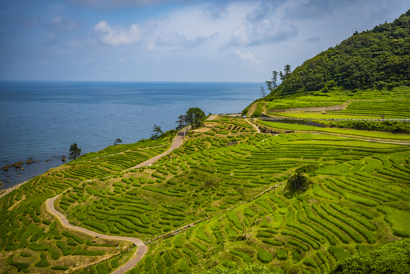 Senmaida Rice Terraces. Editorial credit: Cyrus_2000 / Shutterstock.com