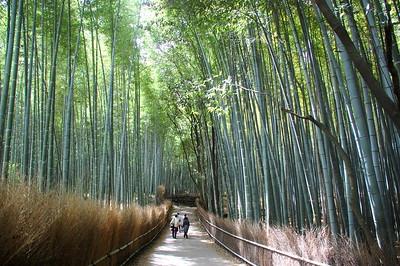 Sagano, Kyoto 2010