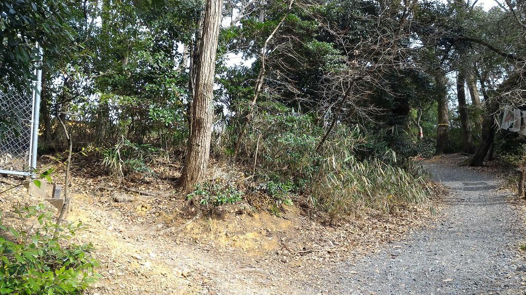 Trail Junction Near Viewpoint