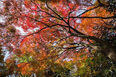 Canopy of Color • Kyoto, Japan