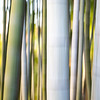 Abstract Bamboo • Kyoto