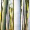 Abstract Bamboo • Kyoto
