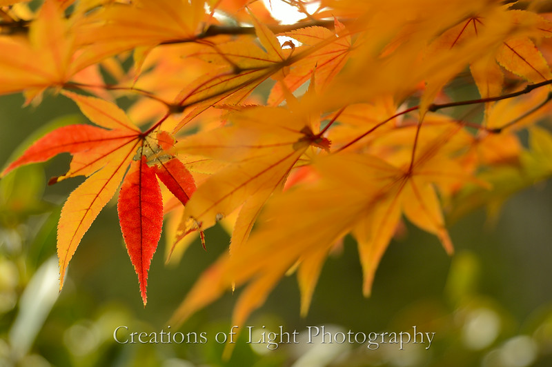 Kyoto in Fall Color  157