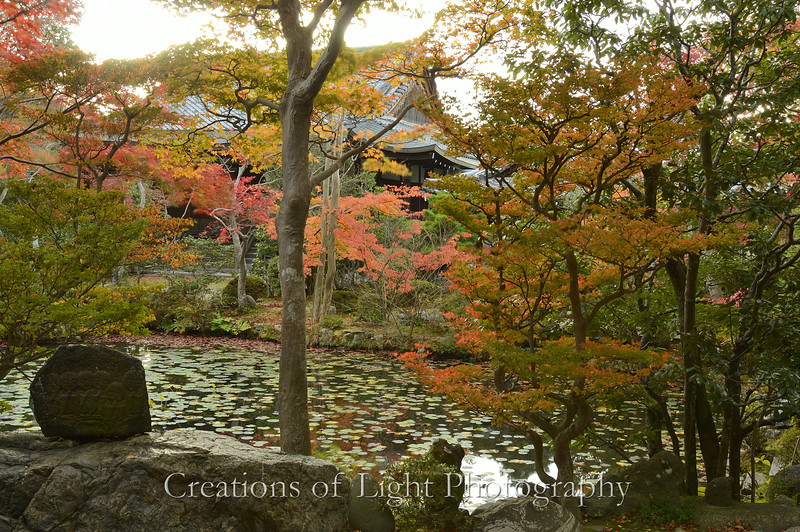 Kyoto in Fall Color  220
