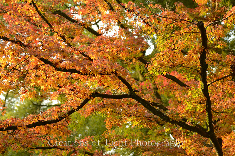 Kyoto in Fall Color  153