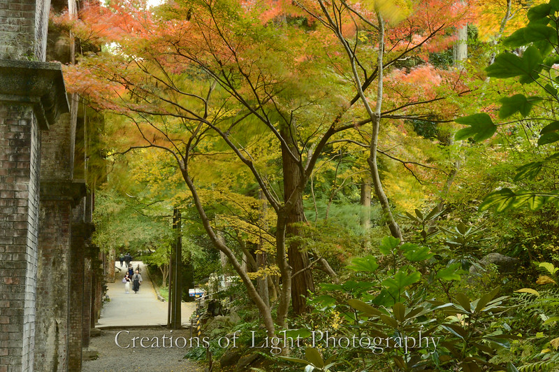 Kyoto in Fall Color  210