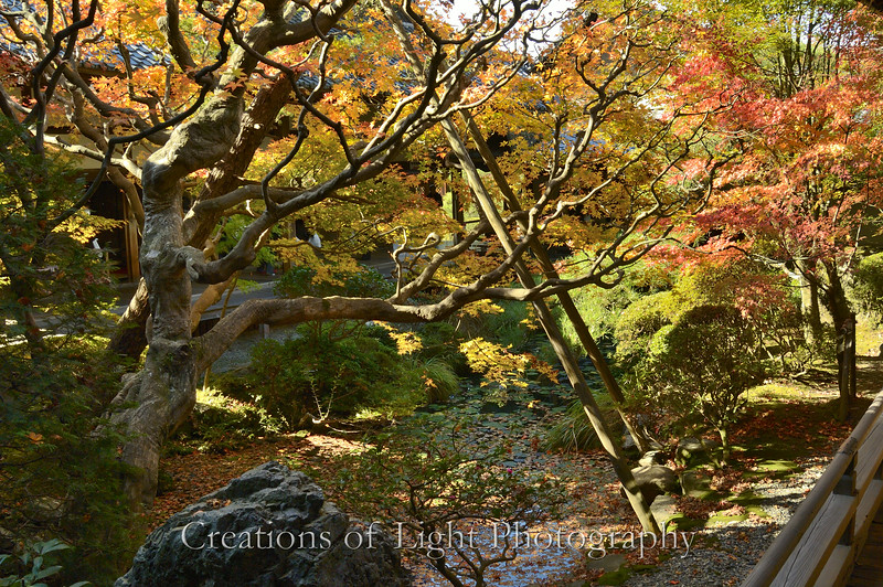 Kyoto in Fall Color  226