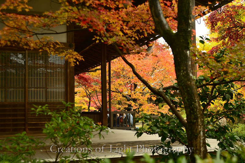 Kyoto in Fall Color  140