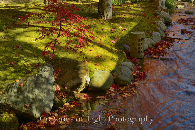 Kyoto in Fall Color  232