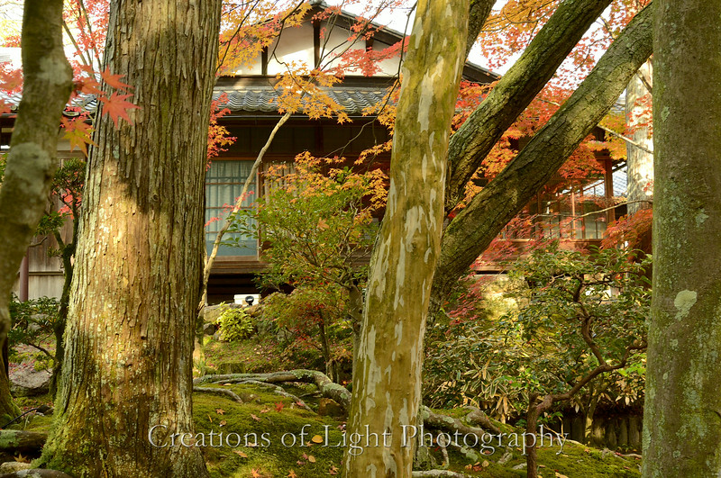 Kyoto in Fall Color  167