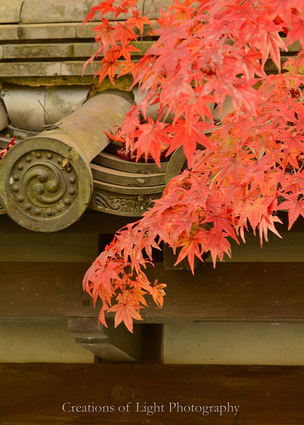 Kyoto in Fall Color  208