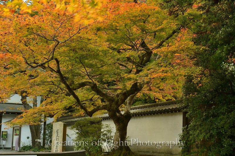 Kyoto in Fall Color  213