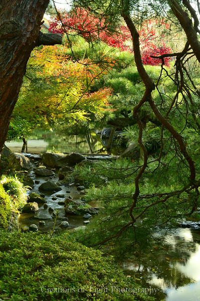 Kyoto in Fall Color  248