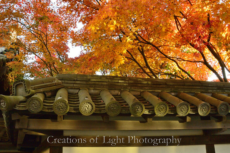 Kyoto in Fall Color  207