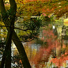 Kyoto in Fall Color  160