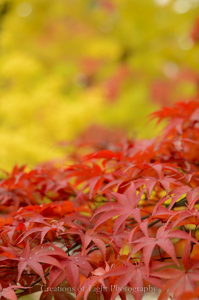 Kyoto in Fall Color  146