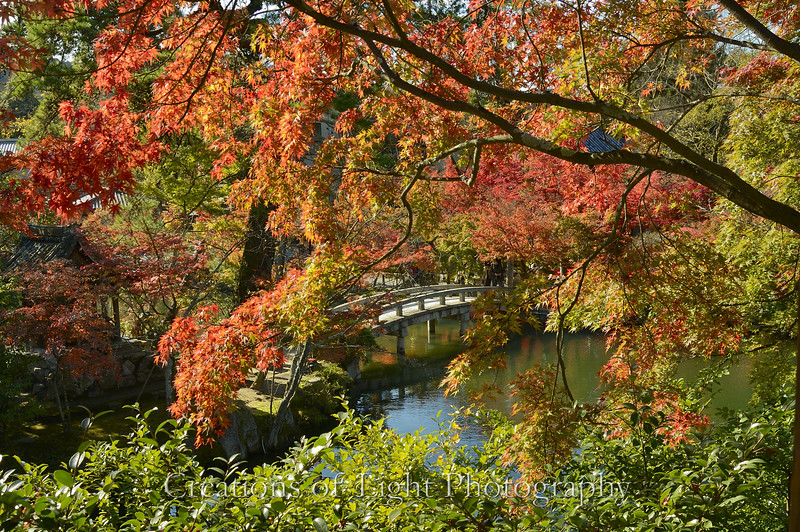 Kyoto in Fall Color  222