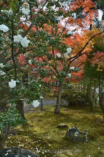 Kyoto in Fall Color  223