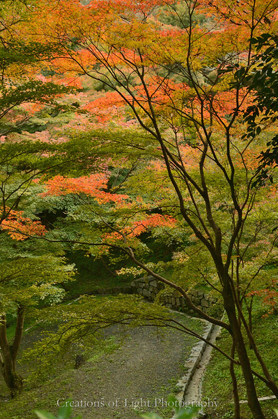Kyoto in Fall Color  200
