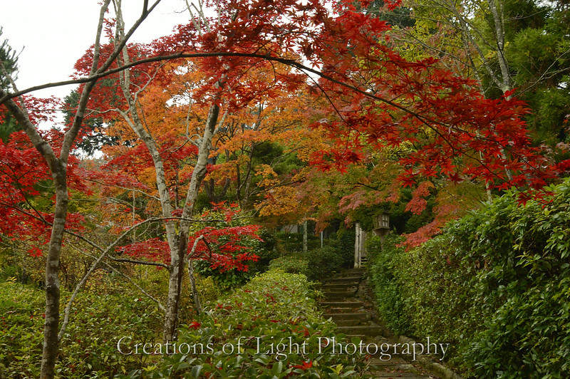 Kyoto in Fall Color  131