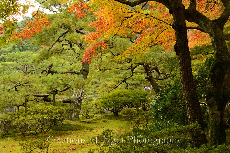 Kyoto in Fall Color  191