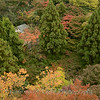 Kyoto in Fall Color  198