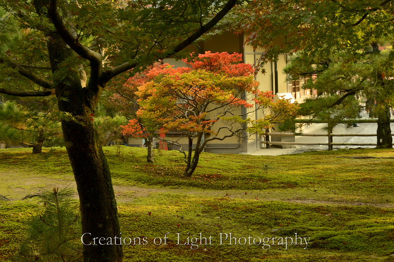 Kyoto in Fall Color  158