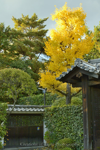Kyoto in Fall Color  205