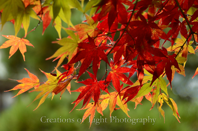 Kyoto in Fall Color  147